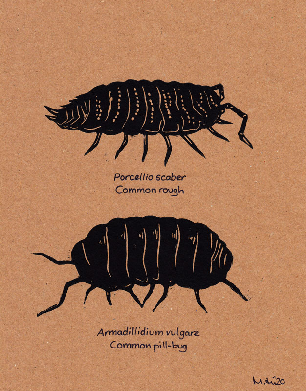 Two woodlice